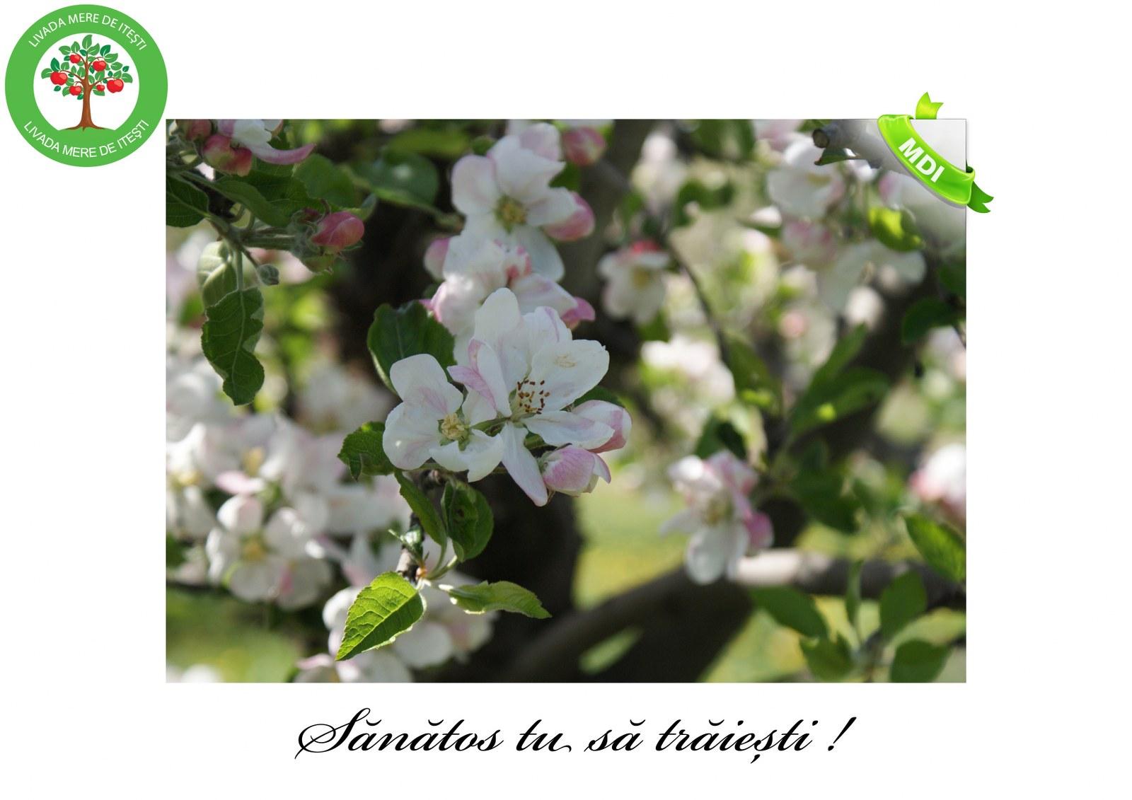 Livada de Itesti (11)