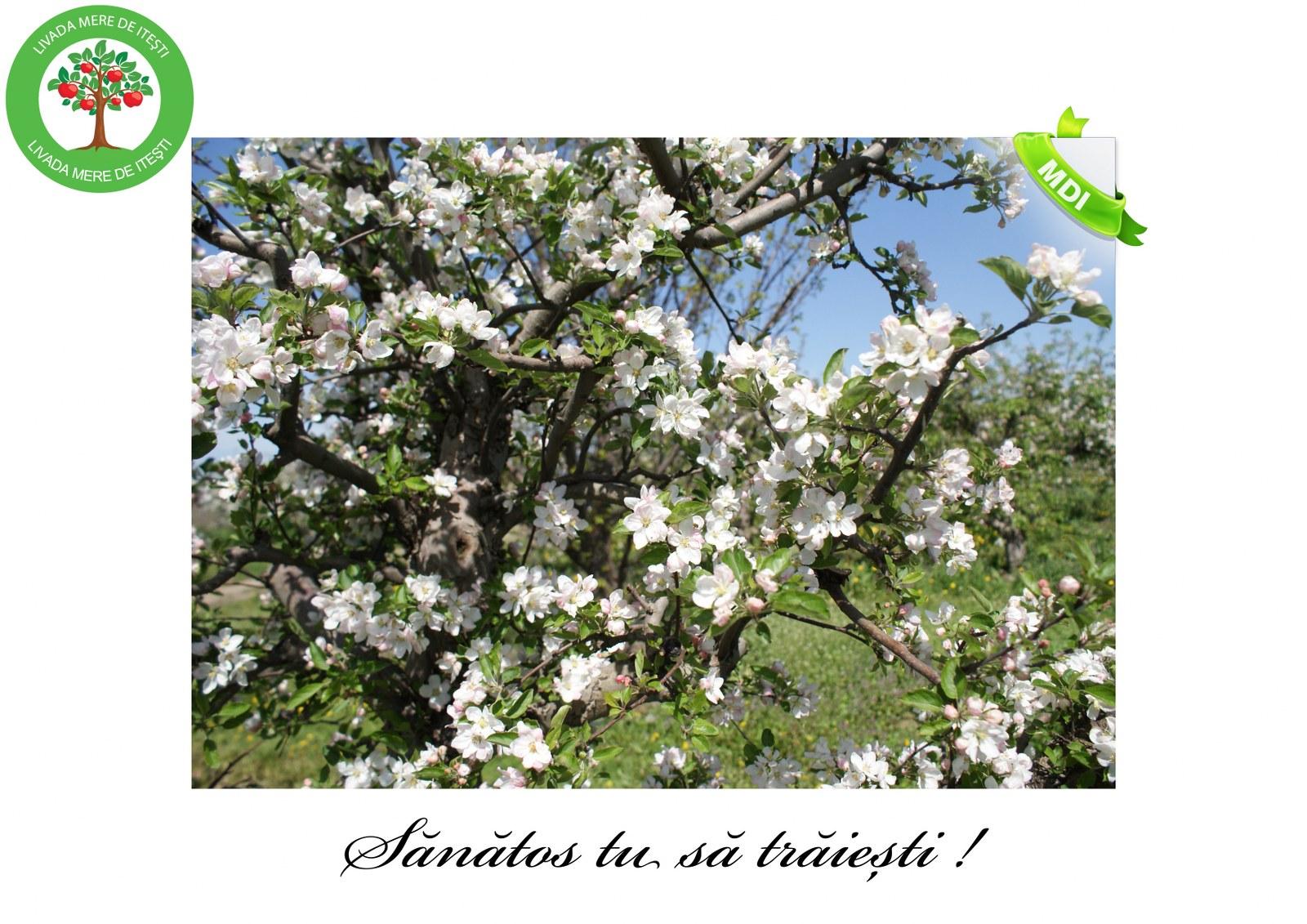 Livada de Itesti (16)