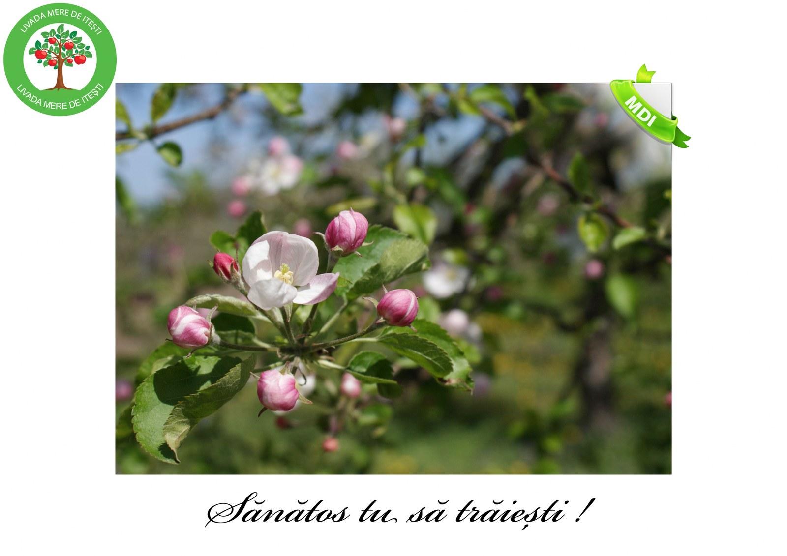 Livada de Itesti (4)