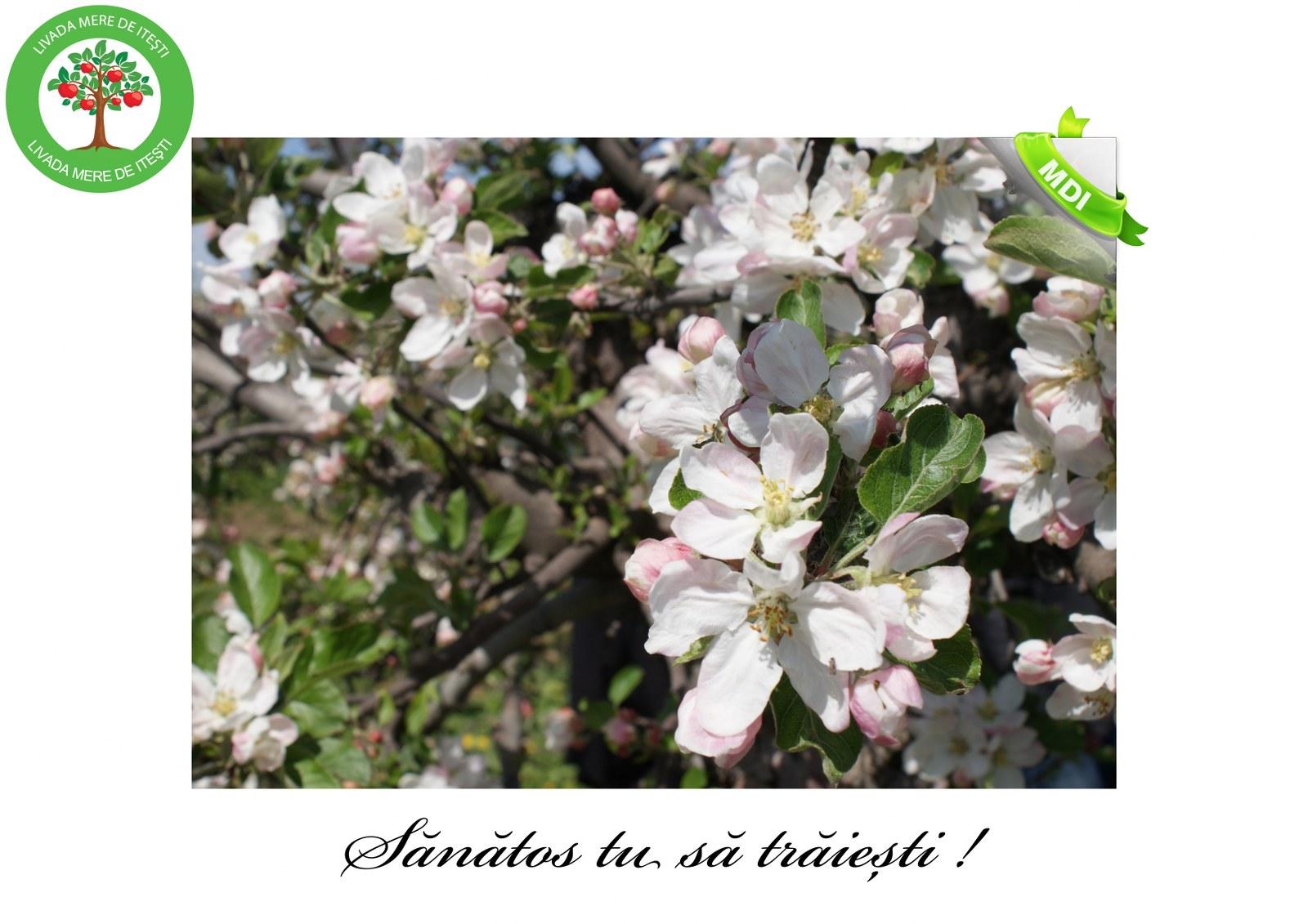 Livada de Itesti (51)