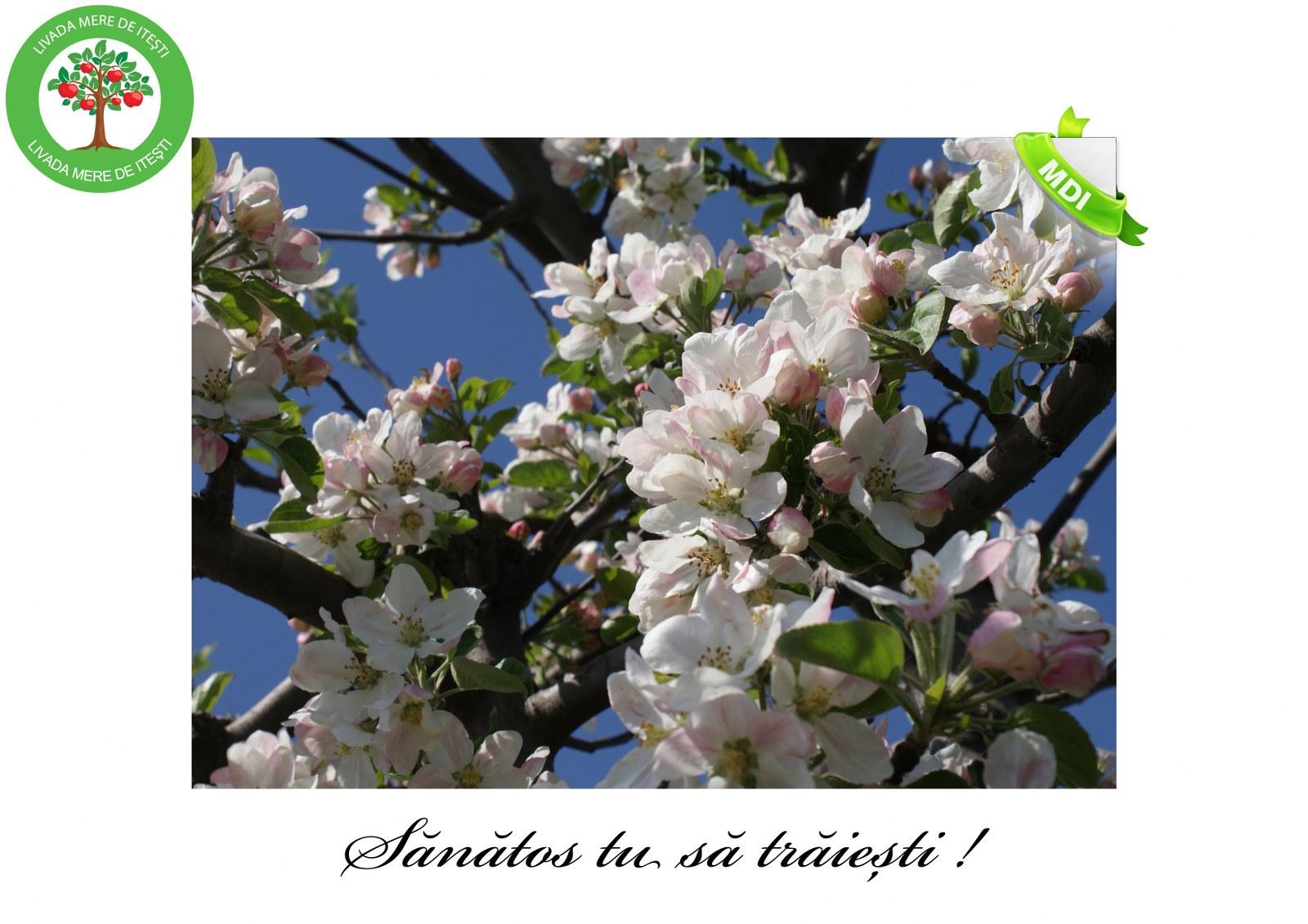 Livada de Itesti (56)