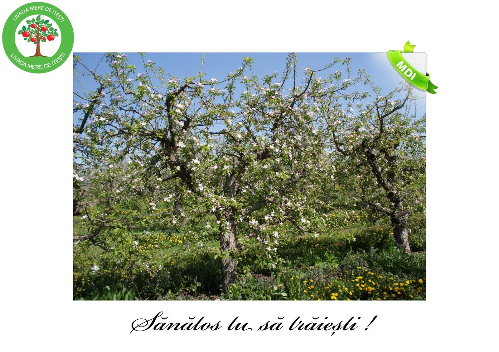 Livada de Itesti (6)