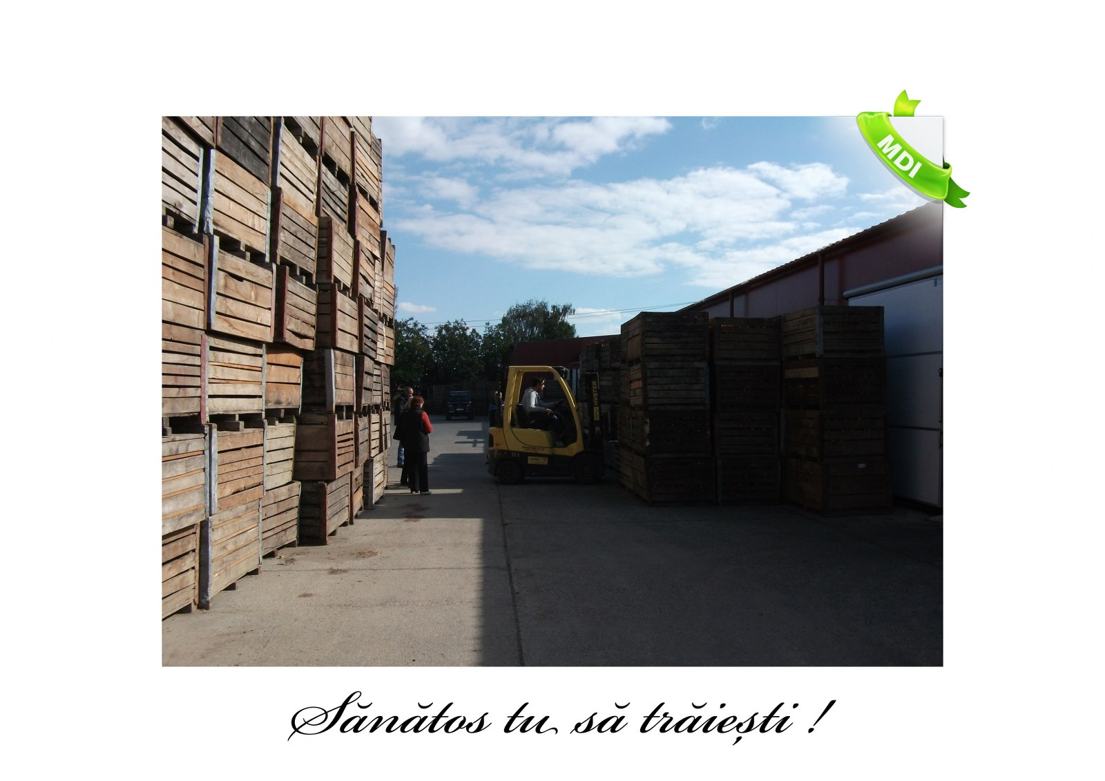 Livada de Itesti (81)