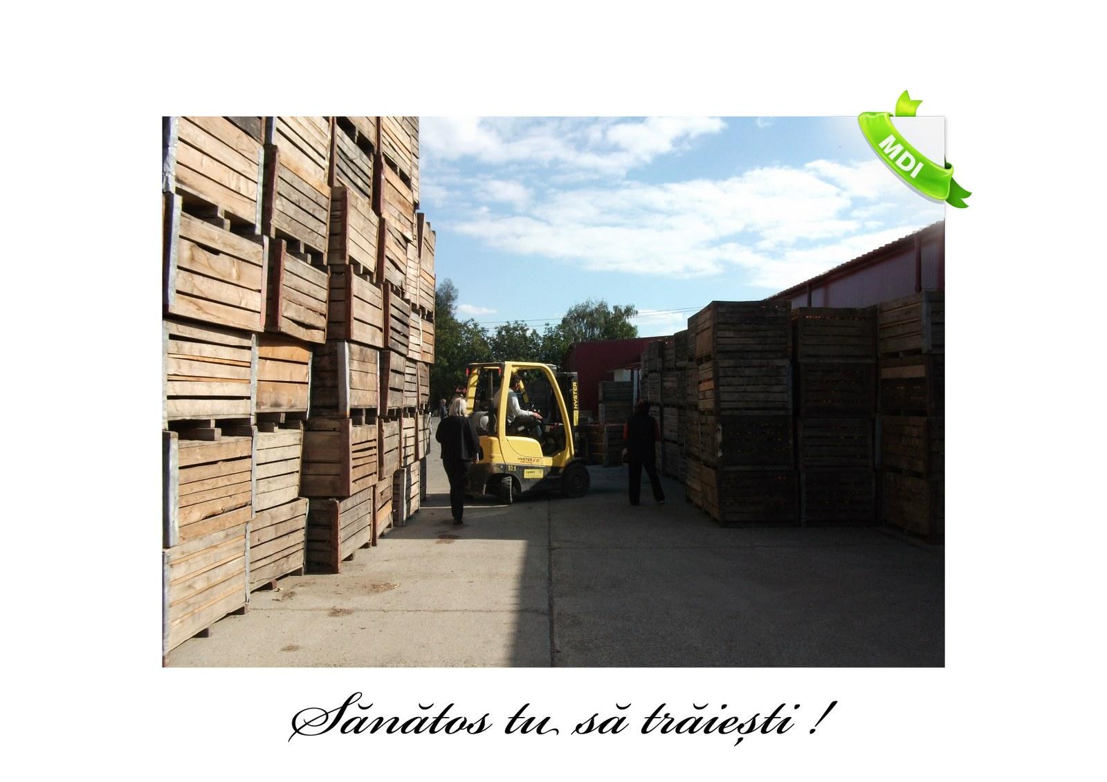 Livada de Itesti (82)