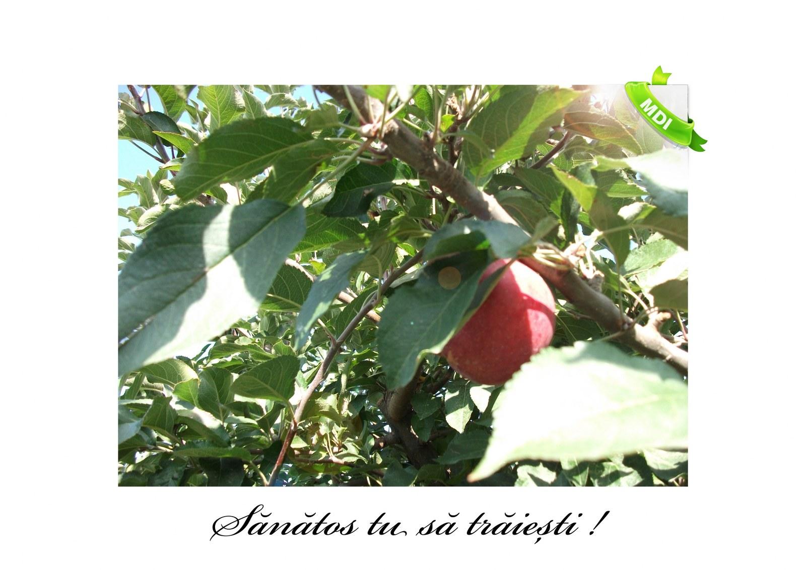 Livada de Itesti (92)