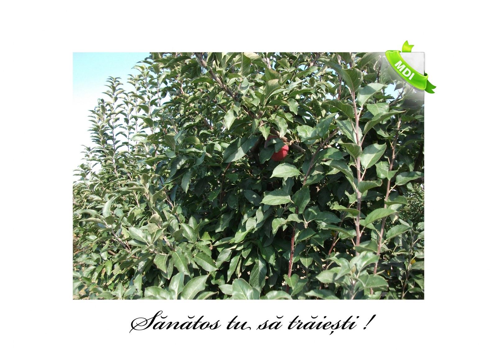Livada de Itesti (93)