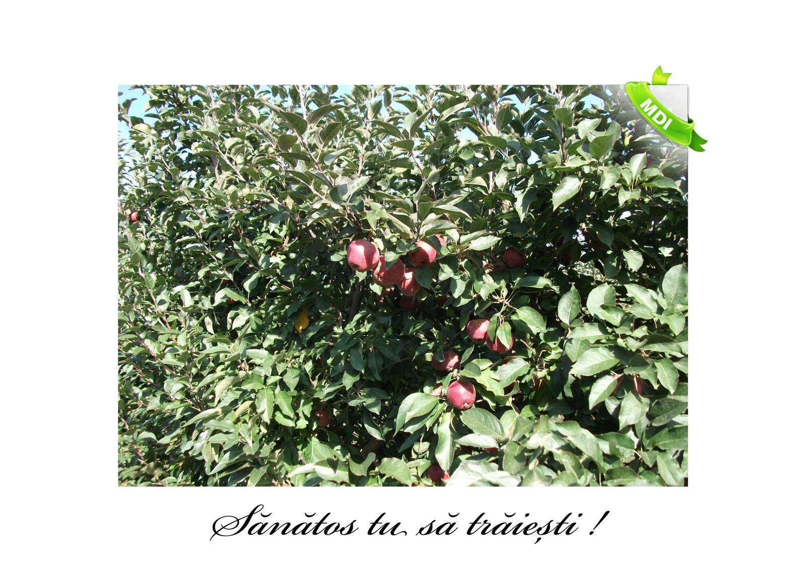 Livada de Itesti (94)