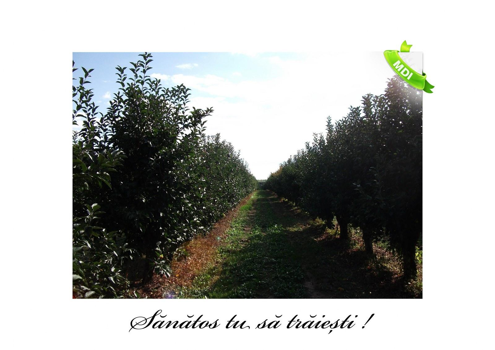 Livada de Itesti (98)