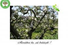 Livada de Itesti (10)