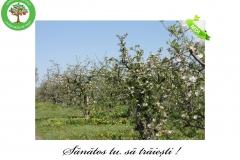 Livada de Itesti (25)