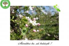 Livada de Itesti (3)