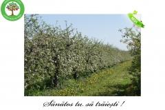 Livada de Itesti (36)