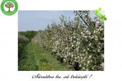 Livada de Itesti (39)